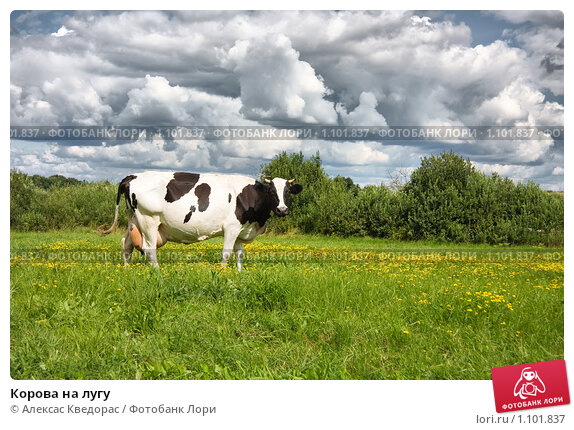 почему коровы истошно мычать на закате поступления Артикулу Наименованию