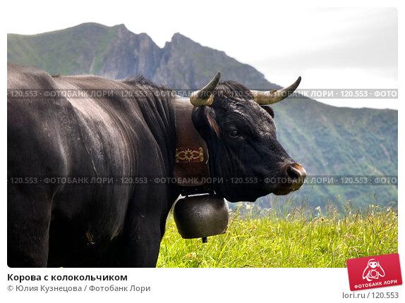 Корова с колокольчиком, фото № 120553, снято 28 июня 2007 г. (c) Юлия Кузнецова / Фотобанк Лори