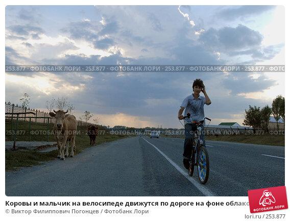 Коровы и мальчик на велосипеде движутся по дороге на фоне облаков, фото № 253877, снято 27 сентября 2006 г. (c) Виктор Филиппович Погонцев / Фотобанк Лори
