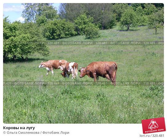 Коровы на лугу, фото № 320481, снято 7 июня 2008 г. (c) Ольга Смоленкова / Фотобанк Лори