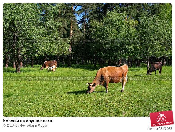 Коровы на опушке леса, фото № 313033, снято 6 июня 2008 г. (c) ZitsArt / Фотобанк Лори