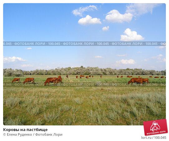 Коровы на пастбище, фото № 100045, снято 8 июля 2007 г. (c) Елена Руденко / Фотобанк Лори