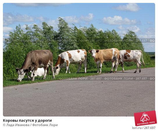 Коровы пасутся у дороги, фото № 287697, снято 9 мая 2008 г. (c) Лада Иванова / Фотобанк Лори