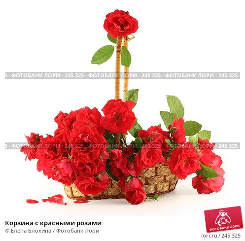 Корзина с красными розами, фото № 245325, снято 28 июня 2007 г. (c) Елена Блохина / Фотобанк Лори