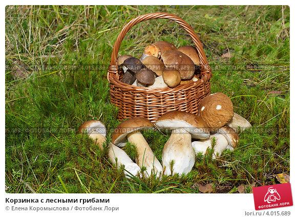 Купить «Корзинка с лесными грибами», эксклюзивное фото № 4015689, снято 30 августа 2012 г. (c) Елена Коромыслова / Фотобанк Лори