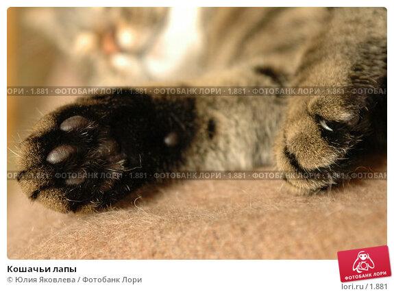 Кошачьи лапы, фото № 1881, снято 21 марта 2006 г. (c) Юлия Яковлева / Фотобанк Лори