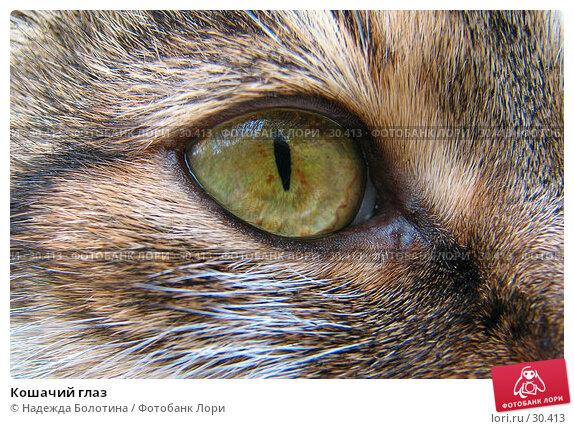 Кошачий глаз, фото № 30413, снято 6 августа 2006 г. (c) Надежда Болотина / Фотобанк Лори