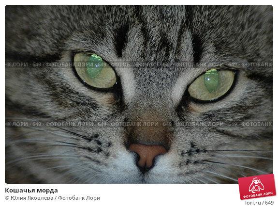Кошачья морда, фото № 649, снято 9 февраля 2004 г. (c) Юлия Яковлева / Фотобанк Лори