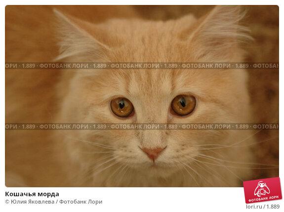 Кошачья морда, фото № 1889, снято 22 марта 2006 г. (c) Юлия Яковлева / Фотобанк Лори
