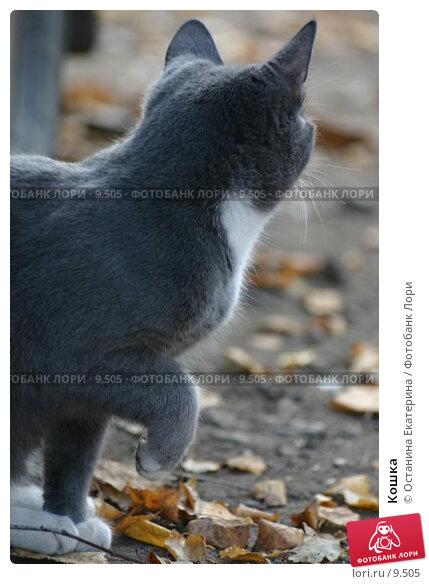 Кошка, фото № 9505, снято 18 октября 2005 г. (c) Останина Екатерина / Фотобанк Лори