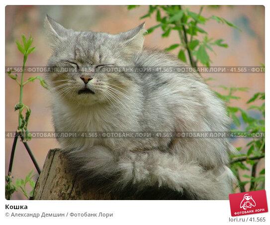 Кошка, фото № 41565, снято 12 июня 2004 г. (c) Александр Демшин / Фотобанк Лори