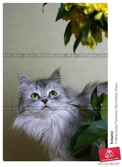 Купить «Кошка», фото № 46337, снято 9 марта 2007 г. (c) Морозова Татьяна / Фотобанк Лори