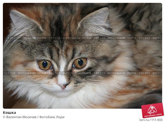 Кошка, фото № 111933, снято 4 декабря 2005 г. (c) Валентин Мосичев / Фотобанк Лори