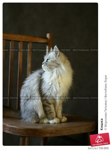 Кошка, фото № 150805, снято 9 октября 2005 г. (c) Морозова Татьяна / Фотобанк Лори