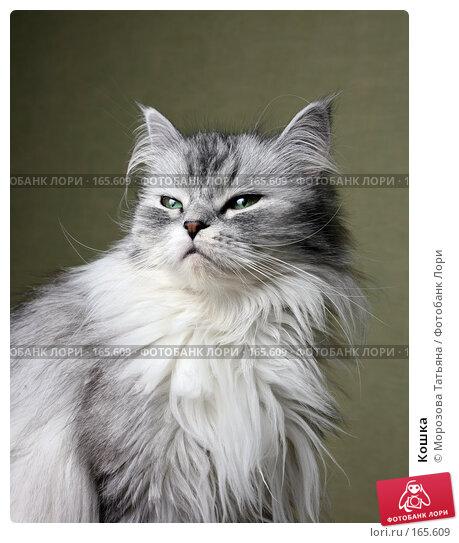 Кошка, фото № 165609, снято 9 марта 2007 г. (c) Морозова Татьяна / Фотобанк Лори
