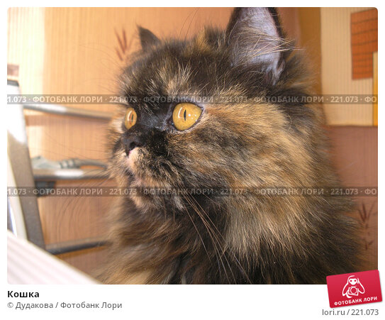 Купить «Кошка», фото № 221073, снято 9 марта 2008 г. (c) Дудакова / Фотобанк Лори