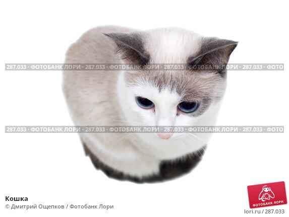 Кошка, фото № 287033, снято 17 апреля 2008 г. (c) Дмитрий Ощепков / Фотобанк Лори