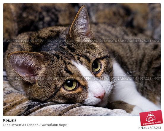 Кошка, фото № 307261, снято 9 мая 2007 г. (c) Константин Тавров / Фотобанк Лори
