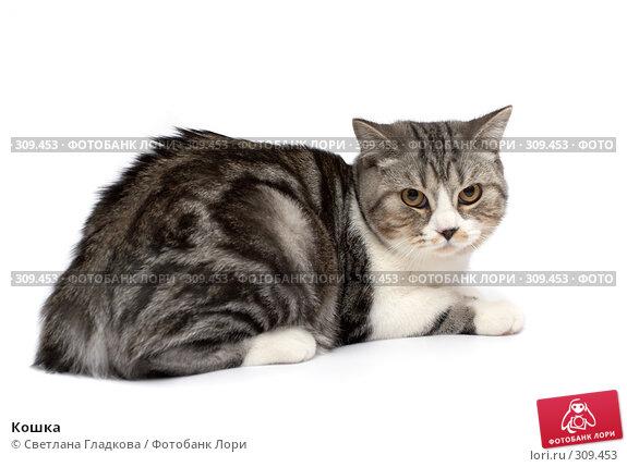 Кошка, фото № 309453, снято 12 апреля 2008 г. (c) Cветлана Гладкова / Фотобанк Лори