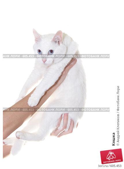 Купить «Кошка», фото № 605453, снято 6 декабря 2008 г. (c) Андрей Клепиков / Фотобанк Лори