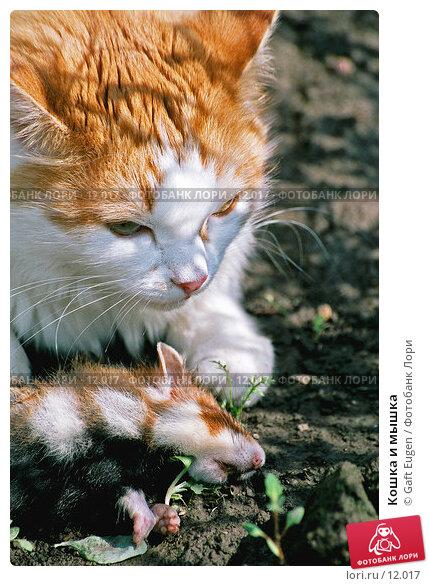 Кошка и мышка, фото № 12017, снято 27 мая 2017 г. (c) Gaft Eugen / Фотобанк Лори