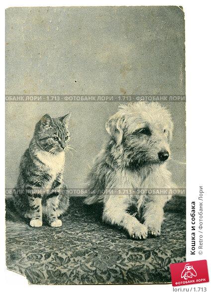 Кошка и собака, фото № 1713, снято 23 августа 2017 г. (c) Retro / Фотобанк Лори
