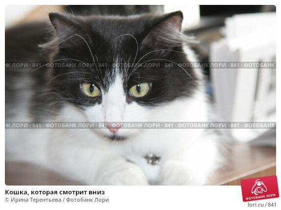 Купить «Кошка, которая смотрит вниз», эксклюзивное фото № 841, снято 29 июля 2005 г. (c) Ирина Терентьева / Фотобанк Лори