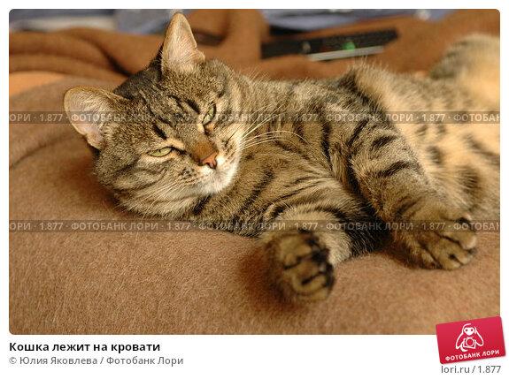 Кошка лежит на кровати, фото № 1877, снято 21 марта 2006 г. (c) Юлия Яковлева / Фотобанк Лори