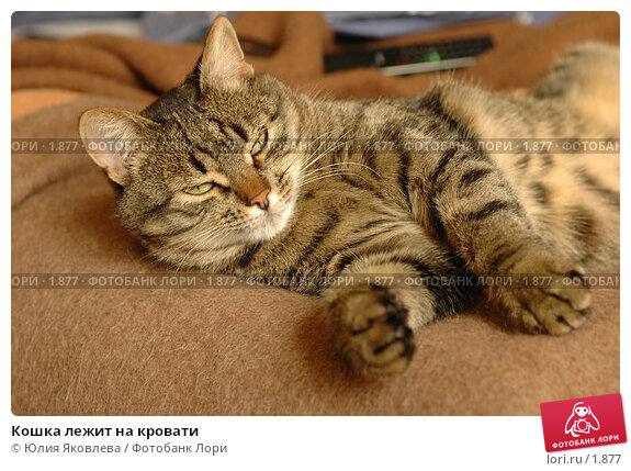 Купить «Кошка лежит на кровати», фото № 1877, снято 21 марта 2006 г. (c) Юлия Яковлева / Фотобанк Лори