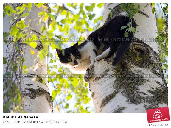 Кошка на дереве, фото № 108165, снято 16 августа 2007 г. (c) Валентин Мосичев / Фотобанк Лори