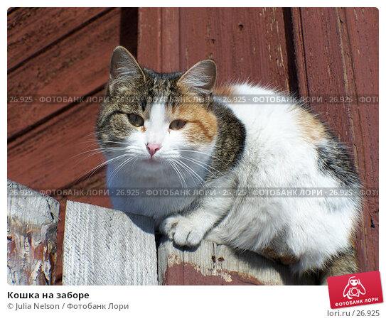 Кошка на заборе, фото № 26925, снято 18 января 2005 г. (c) Julia Nelson / Фотобанк Лори