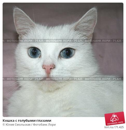 Кошка с голубыми глазами, фото № 71425, снято 7 августа 2007 г. (c) Юлия Смольская / Фотобанк Лори