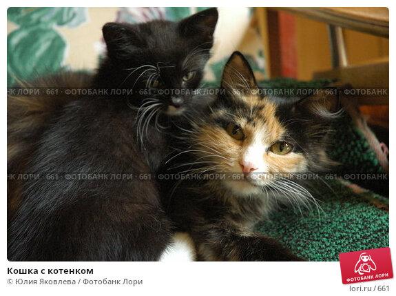 Кошка с котенком, фото № 661, снято 28 июня 2005 г. (c) Юлия Яковлева / Фотобанк Лори