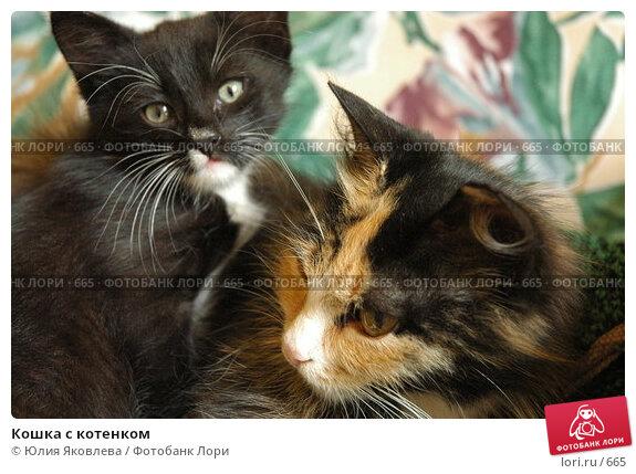 Кошка с котенком, фото № 665, снято 28 июня 2005 г. (c) Юлия Яковлева / Фотобанк Лори