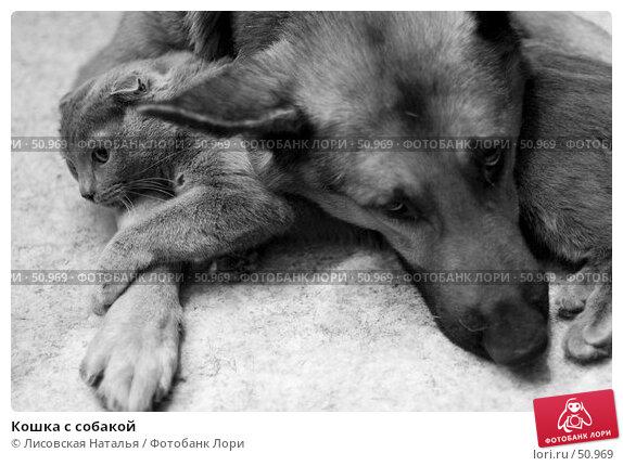 Кошка с собакой, фото № 50969, снято 16 декабря 2005 г. (c) Лисовская Наталья / Фотобанк Лори