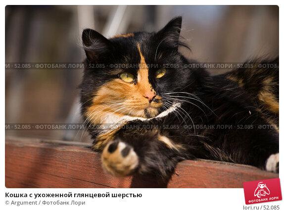 Кошка с ухоженной глянцевой шерстью, фото № 52085, снято 28 марта 2007 г. (c) Argument / Фотобанк Лори