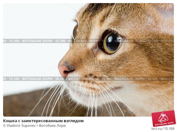 Кошка с заинтересованным взглядом, фото № 15109, снято 10 декабря 2006 г. (c) Vladimir Suponev / Фотобанк Лори