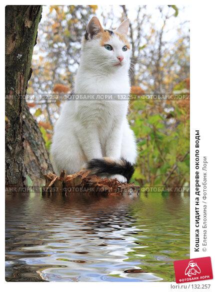 Кошка сидит на дереве около воды, фото № 132257, снято 28 мая 2017 г. (c) Елена Блохина / Фотобанк Лори