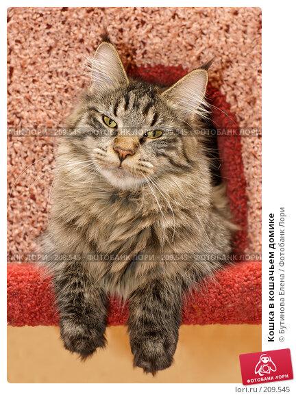 Кошка в кошачьем домике, фото № 209545, снято 26 февраля 2008 г. (c) Бутинова Елена / Фотобанк Лори