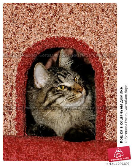 Кошка в кошачьем домике, фото № 209897, снято 26 февраля 2008 г. (c) Бутинова Елена / Фотобанк Лори