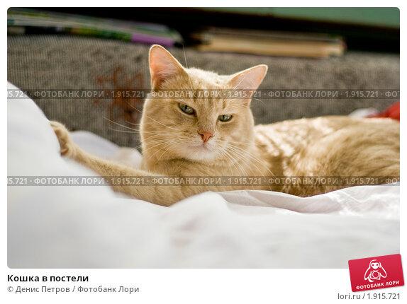 Кошка в постели. Стоковое фото, фотограф Денис Петров / Фотобанк Лори