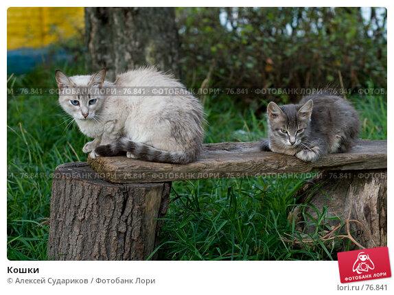 Кошки, фото № 76841, снято 26 августа 2007 г. (c) Алексей Судариков / Фотобанк Лори