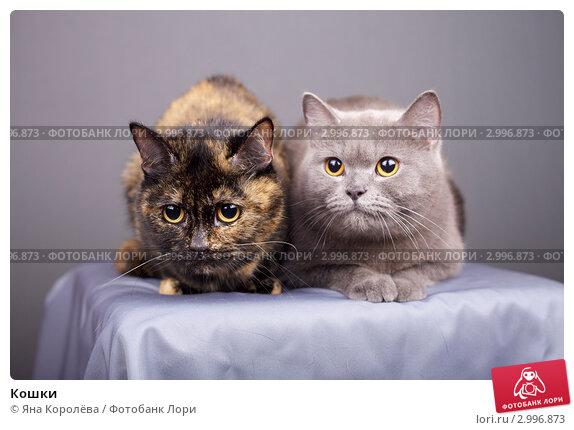 Купить «Кошки», эксклюзивное фото № 2996873, снято 25 мая 2019 г. (c) Яна Королёва / Фотобанк Лори