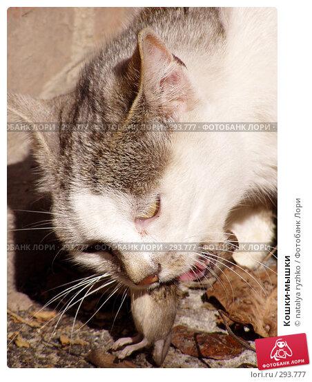Купить «Кошки-мышки», фото № 293777, снято 21 ноября 2017 г. (c) natalya ryzhko / Фотобанк Лори