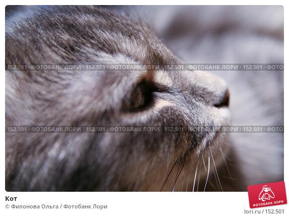 Купить «Кот», фото № 152501, снято 4 ноября 2007 г. (c) Филонова Ольга / Фотобанк Лори