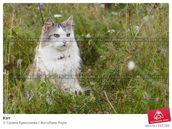 Кот, фото № 157733, снято 2 августа 2007 г. (c) Галина Ермолаева / Фотобанк Лори