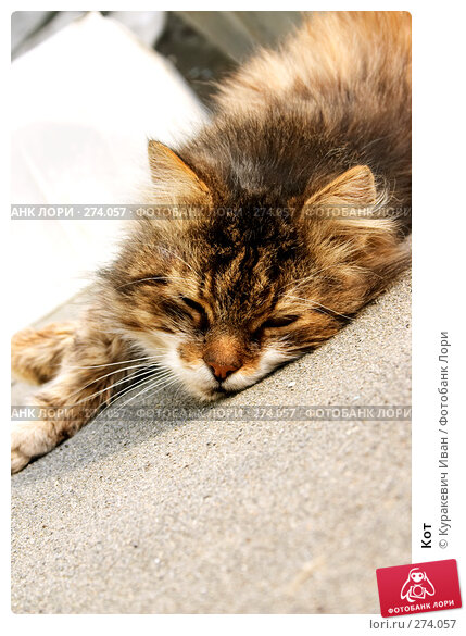 Кот, фото № 274057, снято 10 декабря 2016 г. (c) Куракевич Иван / Фотобанк Лори