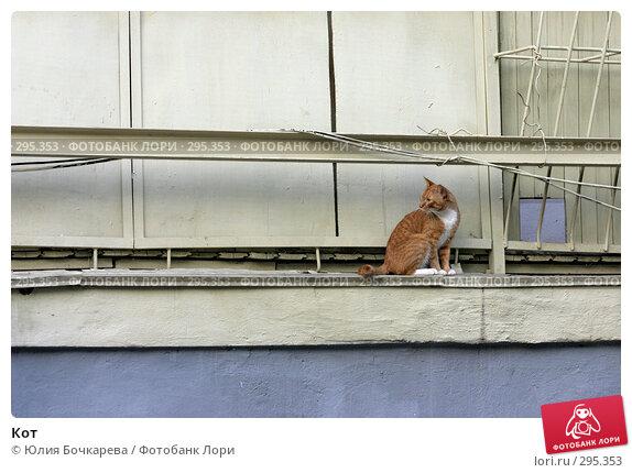 Купить «Кот», фото № 295353, снято 12 мая 2005 г. (c) Юлия Бочкарева / Фотобанк Лори