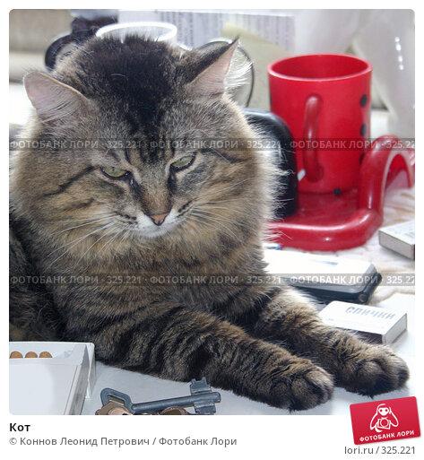 Кот, фото № 325221, снято 17 июня 2008 г. (c) Коннов Леонид Петрович / Фотобанк Лори