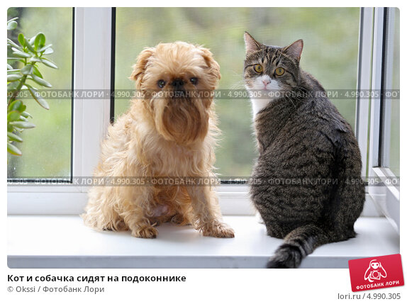 Кот и собачка сидят на подоконнике. Стоковое фото, фотограф Okssi / Фотобанк Лори